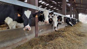 maison vache